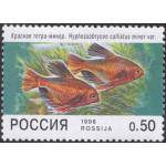 Аквариумные рыбы.