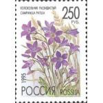 Полевые цветы России.