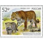Выпуск по программе Европа . Национальная дикая природа. Исчезающие виды животных. Переднеазиатский леопард