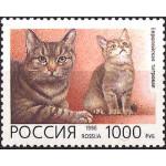 Породы домашних кошек.